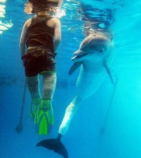 Cieran swims with dolphin