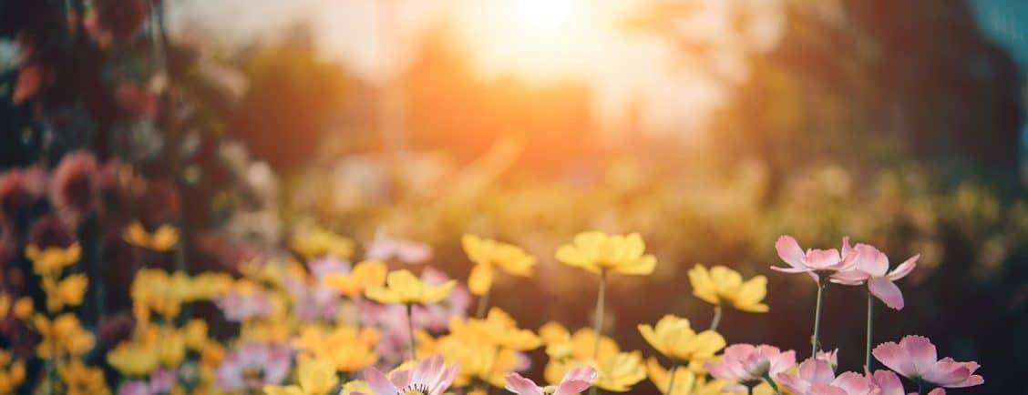 bloom blossom flora 158636