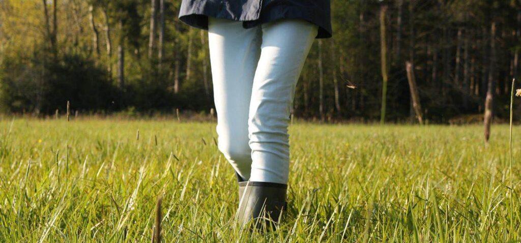 meadow 2566697 1920 1